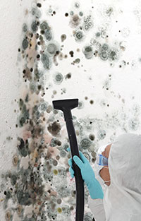 Mold: Frequently Asked Questions